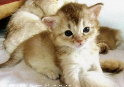 Bebe chat - Chat tout mignon ...